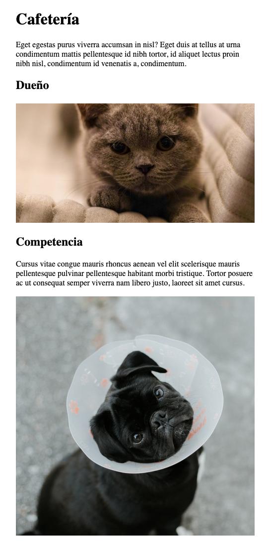 Actividad restaurante de gatos